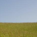 映画『ムーラン(2020)』特報動画が公開!ディズニー実写化が止まらない